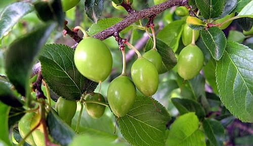 Лечение чрез плодове и зеленчуци